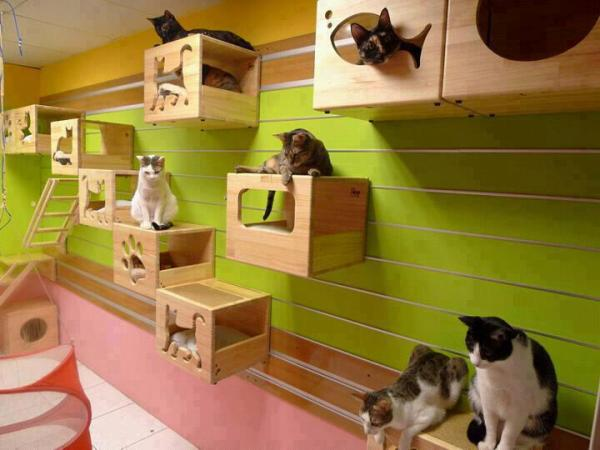 Creative Decor For Cats Home Design Garden Architecture Blog