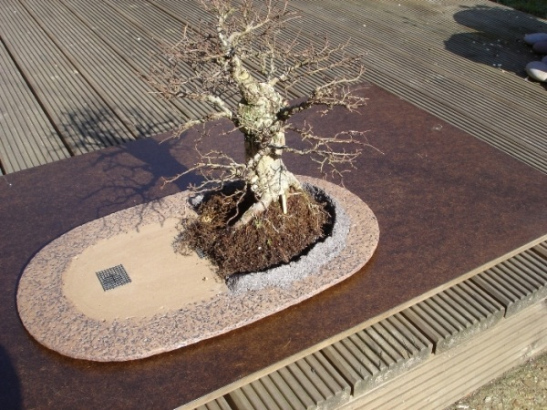 Bonsai-home-hobbit-8