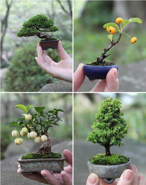 artistic use of gardening techniques bonsai miniature tree home design garden architecture. Black Bedroom Furniture Sets. Home Design Ideas