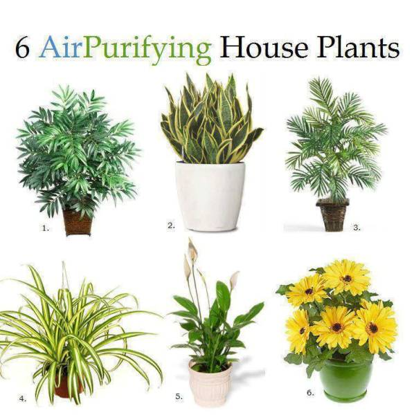 Improve the air quality with houseplants home design for Nasa indoor plant list