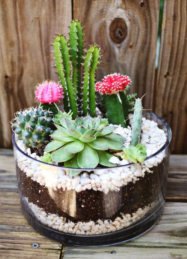 simple-cactus-garden-1