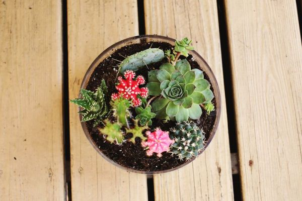 simple-cactus-garden-6