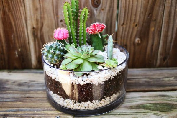 simple-cactus-garden-8