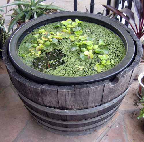DIY-Containers-Garden-Pond-111