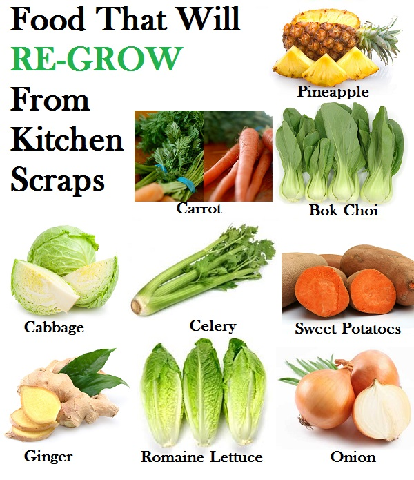 food-that-will-regrow